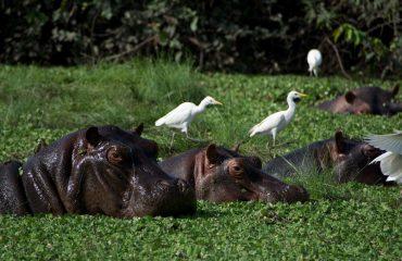 Bijagos Island Guinea Bissau