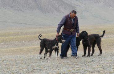 Kirgistan Taigan Hunde